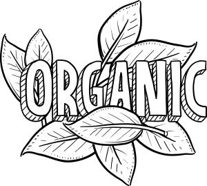bigstock-Organic-food-sketch-42350398